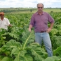 Venta de Tabaco Virginia, Burley y Criollo (Negro)