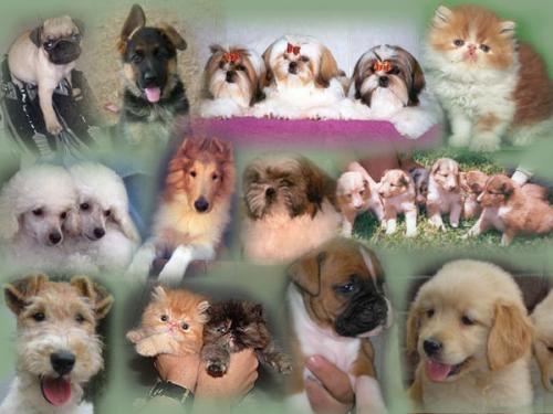 Cachorros paraguay, los mejores para la venta... contacta con nosotros