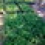 venta de moringa oleifera,capsulas ,planta y semillas