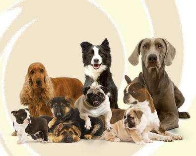Toda la variedad de cachorros de razas que buscas, puros, y super hermosos!!!