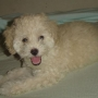 Venta de cachorros en Paraguay