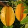 Frutas CARAMBOLA