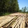Vendo  madera, 70 hectáreas reforestadas