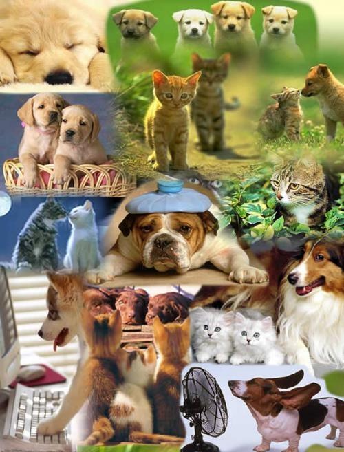 Venta de cachorros en paraguay, los mejores contacta con nosotros...