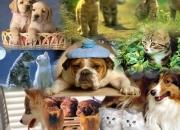 Cachorros paraguay