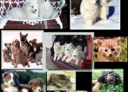 Los mejores cachorros de paraguay
