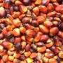 Refinado y crudo: El aceite de palma, aceite de girasol, aceite de soja