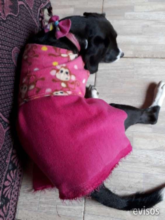 Oferta ropa para mascotas en gral
