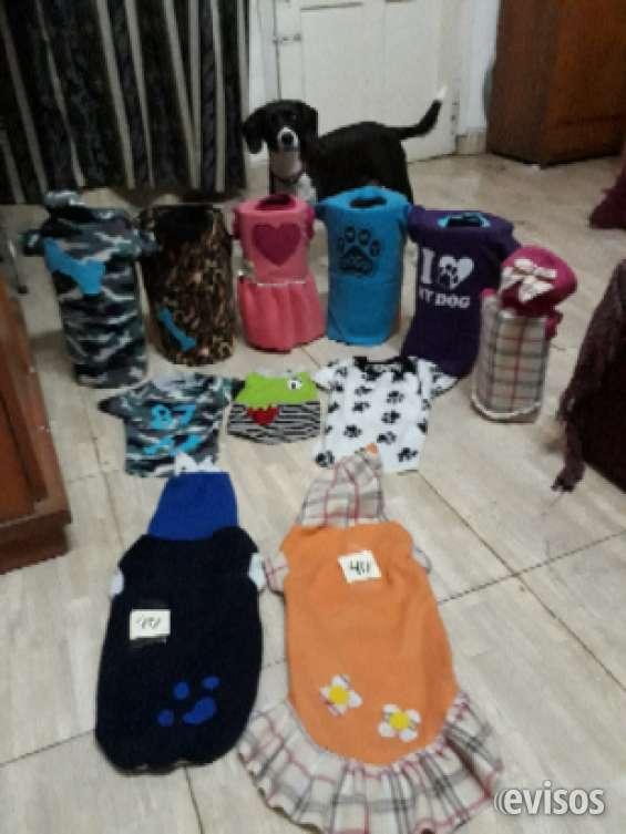 Oferta ropa para mascotas