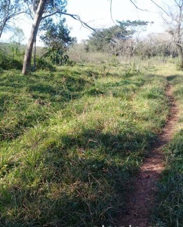 Vendo campo de 12 has en yaguarón