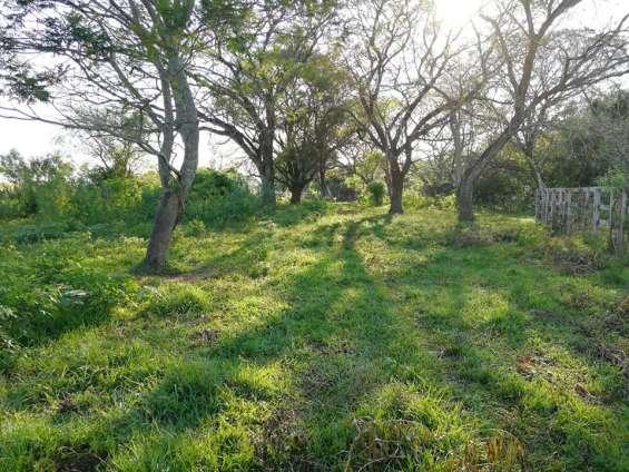 Fotos de Vendo 27 hectáreas de campo en general artigas!!!! 2